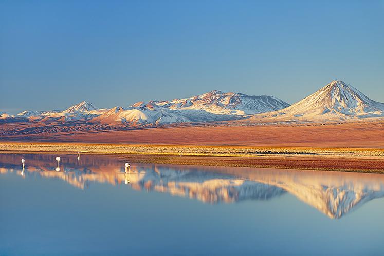 Wild flamingos, Atacama Desert, Chile