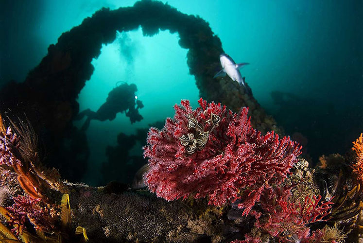 Shipwreck diving in Cape Town, South Africa